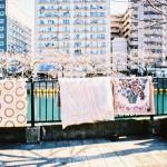 大岡川2(横浜市中区)